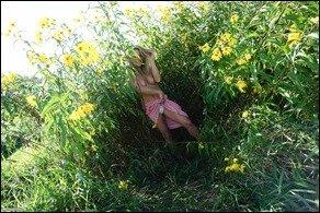 meet-madden-sunflowers-04
